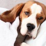 Sjuk hund nedbäddad
