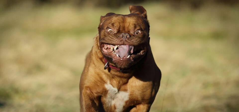Snygg hund