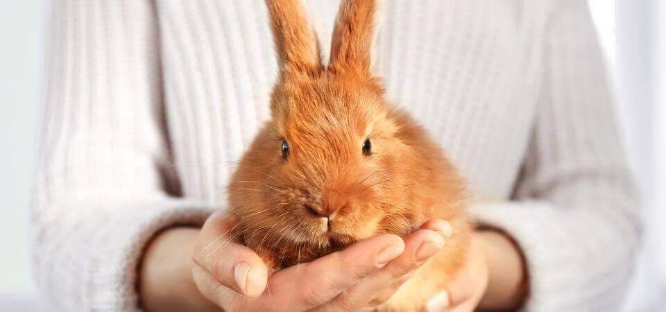 En gullig kanin