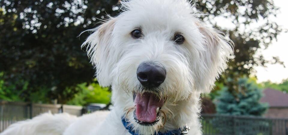 Glad liten hund
