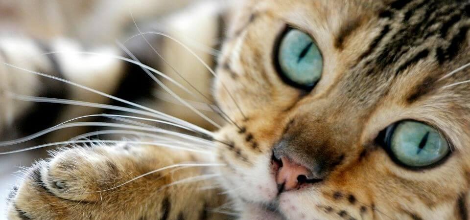 Katten tittar pa dig